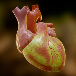VR_heart_icon