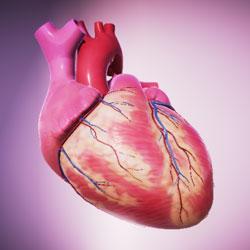 Heart-explorer